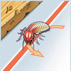Termite Exposure to Premise Treated Zone